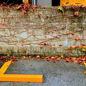 【音声ナシ«note»】〚花空恋慕のフォトメッセージ〛20.11.11〜『〔遺リ続ケル〕』…