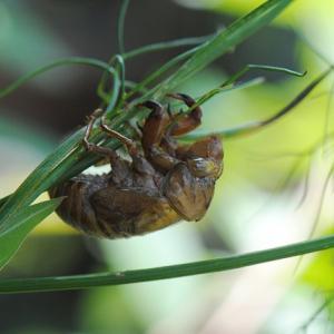 自閉症児ひい&かっちママ:4歳児ことしの昆虫好きに付き合う・・・