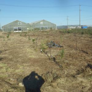 新農園に600坪の果樹園誕生