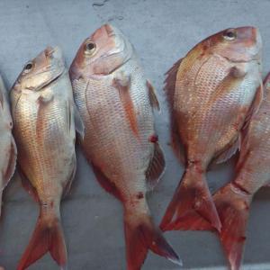 タイ漁ワルツ 12月講習会日程
