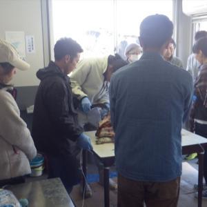 猪解体処理と茶作り実習 お野人イベント