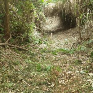 草のトンネル シダシックパーク