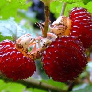 果肉エネルギーと意識の関係