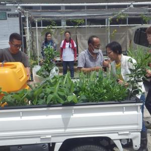 指宿開墾農園 植樹作業