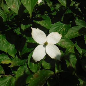 初夏の野山の有用植物 画像