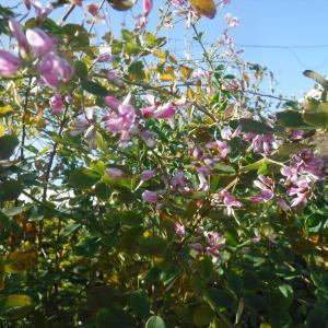 マリンビレッジ晩秋の花実 画像