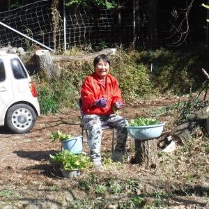 梅母 復活の日の開墾農園