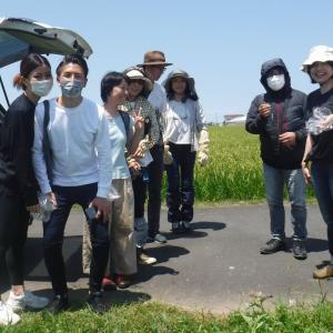 協生農法講習会 ミョウガの花