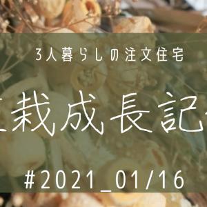 植栽成長記録① 2020_01/16