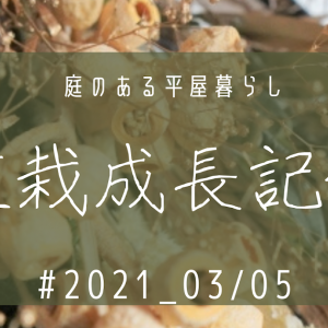 植栽成長記録② 2021_03/05