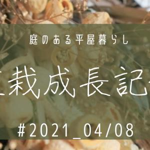 植栽成長記録③ 2021_04/08