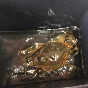 ドデかい蟹🦀