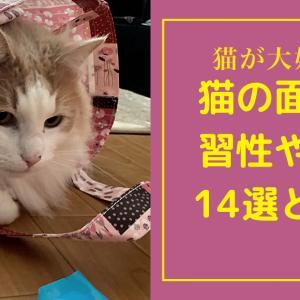 【猫との暮らし】14個の面白い習性や行動の謎に迫る!!