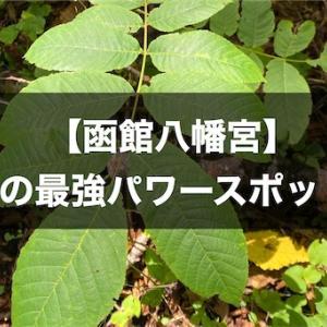 【函館八幡宮】私の最強パワースポット。