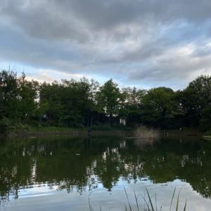タナゴ釣り 山崎公園 20210724