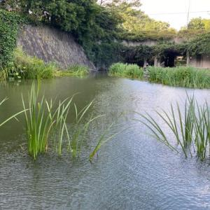 タナゴ釣り 山崎公園 20210809