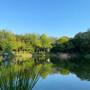 タナゴ釣り 山崎公園 20210828
