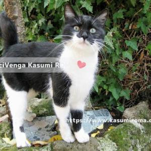イタリアで 「お気に入りのキュートな写真見せて!」- 猫 -@ローマから♪