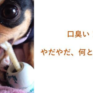 愛犬の口臭・口腔ケアしてますか?