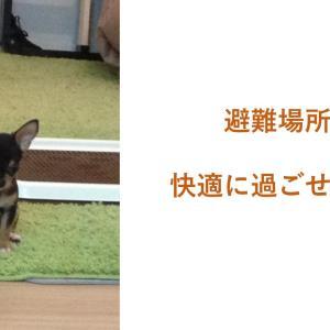 愛犬と避難所に移動!!!! そんなシュチエーションを考えておくべき!
