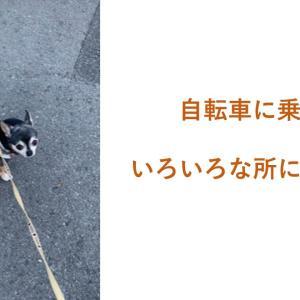 犬をかごに乗せて散歩に行きたい。散歩のマンネリ化を解消しよう。