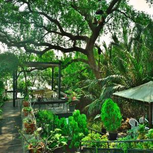 「バーンカチャオ(Bang Kachao)」~バンコクの肺、色々な見どころトゥリーハウス、マーケット、公園等 ③