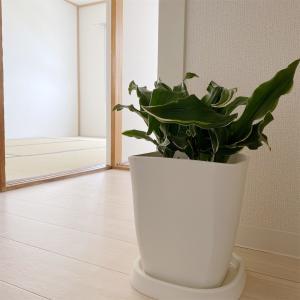 鬼門玄関にオススメの植物。