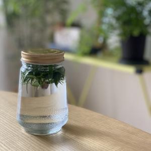 乾燥肌対策に手作り化粧水を使用中。