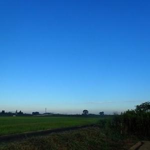 草刈りの日々