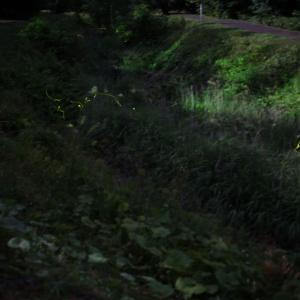 須賀川市 大滝川公園 蛍撮影