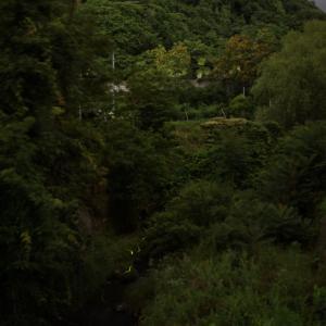 桑折町ホタル撮影