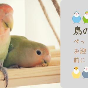 鳥の十戒|ペットをお迎えする人に知っていて欲しいこと