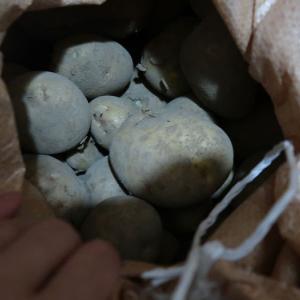 【番外編】ジャガイモの保存