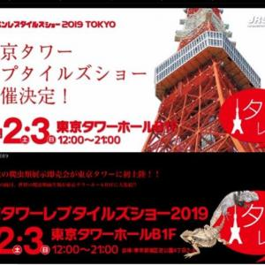 東京タワーレプタイルズショー2019に行ってきた!正直な感想【改善の余地あり?!】