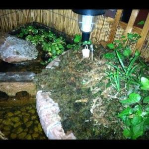 庭で小さなビオトープを楽しむ【簡単に出来ます】