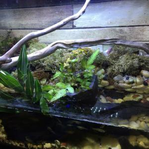 川で拾った流木を水槽デザインに使った話【センスなくてよし】