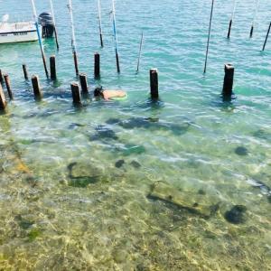 弁天島と浜名湖で遊んだ夏【最高】