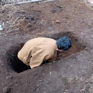 庭にどでかい穴を掘る旦那の話【ツツジ伐採ビフォーアフター】【夫婦で外作業】
