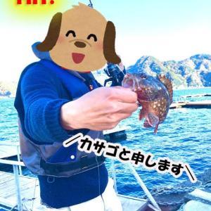 雑魚と言われる「ベラ」を煮付けて食う話【全然雑魚じゃない件について】【カサゴも食べたよ】