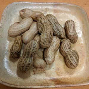 東京|プランター栽培【ピーナッツ/落花生の収支結果】まとめ