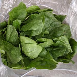 育てやすい野菜の種を紹介その①初心者/家庭菜園/育て方は種袋裏に記載あり