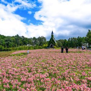 【岐阜】梅雨のラベンダー畑を見に牧歌の里へ