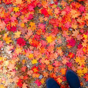 【岐阜】中津川市の紅葉おすすめスポット紹介|夕森公園