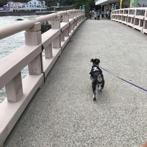 愛犬と旅行 ~準備・持っていくもの~