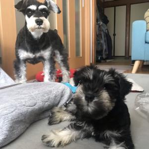 共働きで犬を飼っている生活 〜散歩・運動〜