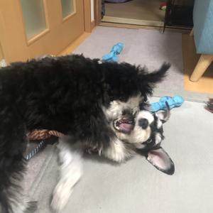 犬の多頭飼い 〜子犬のしつけ・進歩具合〜