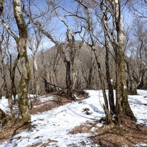 藤原ブルーと春の妖精たち♪ 藤原岳で・・・3 多志田山から頂上へ