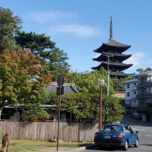 奈良も秋の行楽シーズン真っ只中!