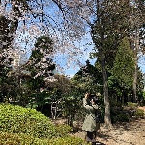 浄光寺の桜2020