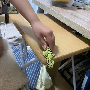 紙粘土のトカゲモドキ